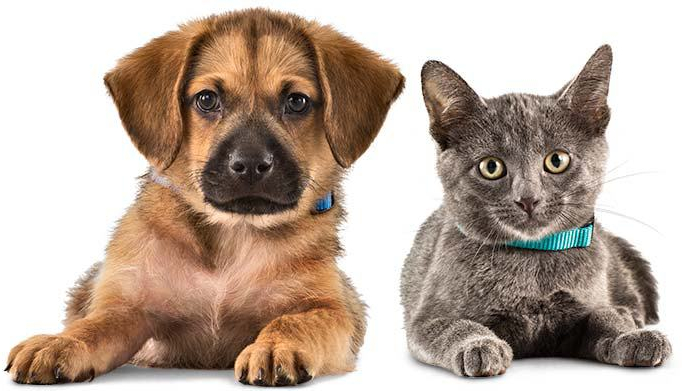 Is your pet disaster ready? MartyAugustine.Wordpress.com