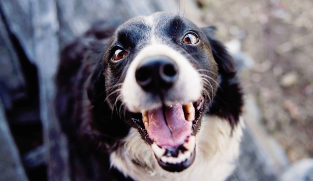 If Dogs Could Talk Blog Article