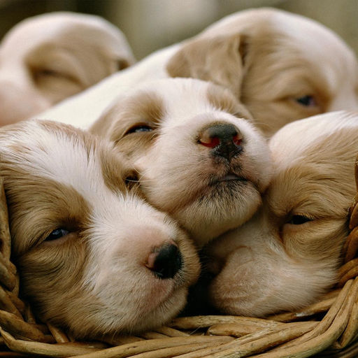 Cute Puppies Happy Motivation