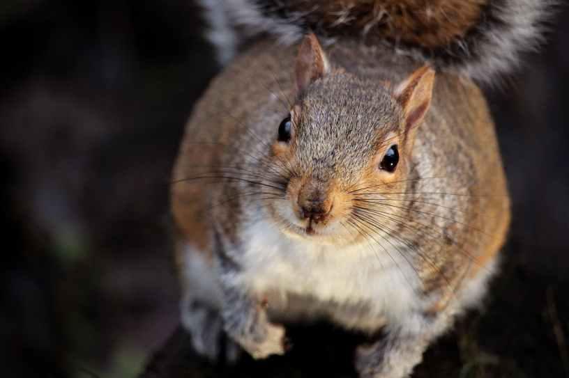 Ran over squirrel blog post life